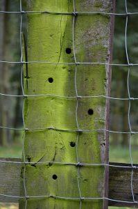 Zaun aus Drahtgeflecht