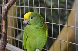 parrot-417967_640